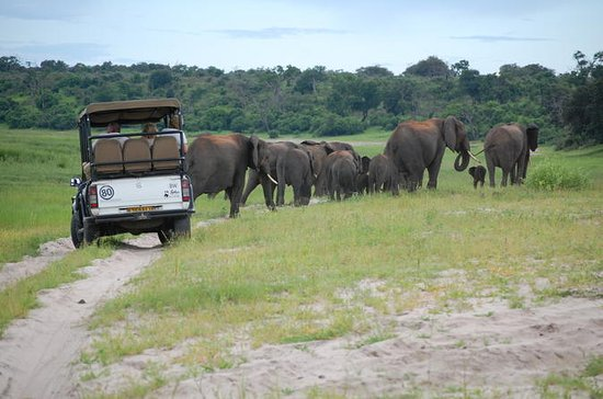 8-Day Botswana and Namibia Tour from