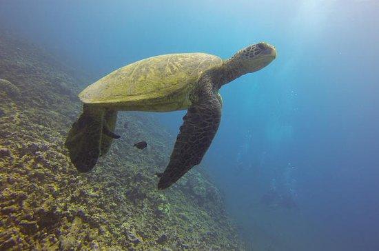 Aloha Nui Snorkel Adventure