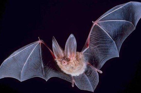 Hong Kong Wildlife Night Walking Tour: Bat Watching