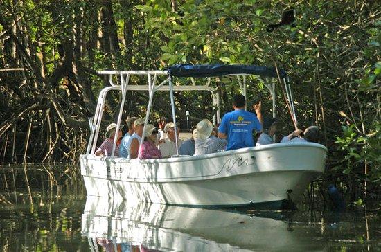 Damas Island Mangrove Tour fra Quepos