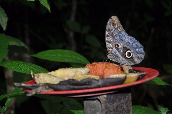 El Castillo, Costa Rica: Mariposa