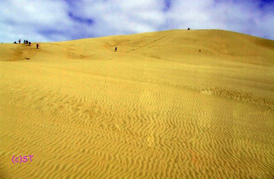Pukenui, Neuseeland: beautiful sand dune