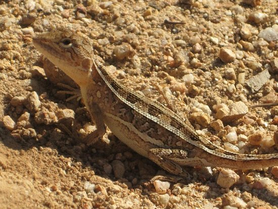 Mareeba, Australia: The only (but interesting) wild life we saw on our hike