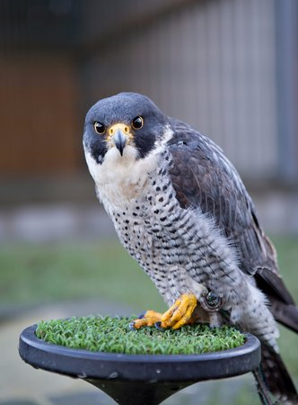 National Bird of Prey Centre