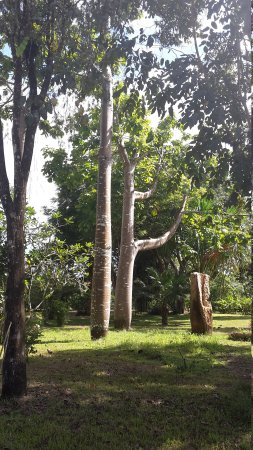 Veragua River House: 20170102_131631_large.jpg
