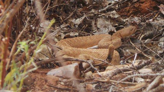 Indian Garden: Rattlesnake