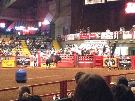 Bull Picture Of Stockyards Rodeo Fort Worth Tripadvisor