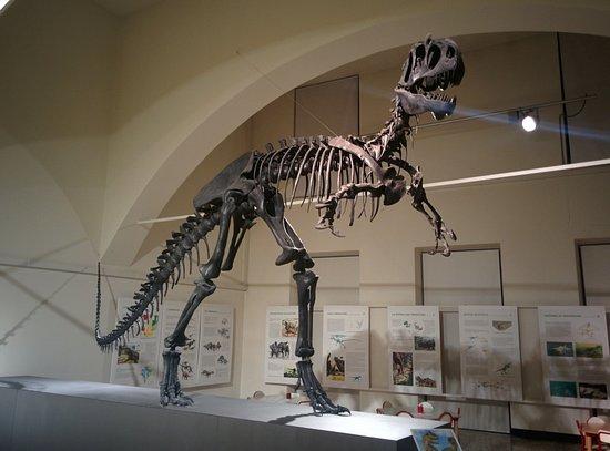 "Museo di Scienze Naturali ""E. Caffi"": scheletro"