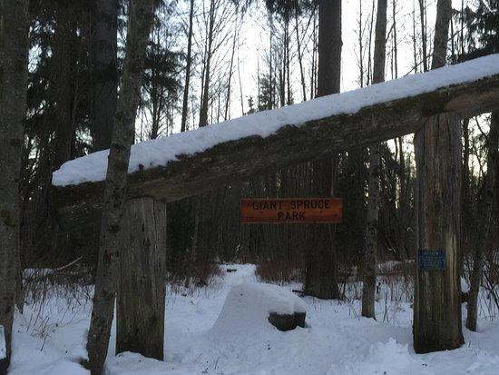 Giant Spruce Park