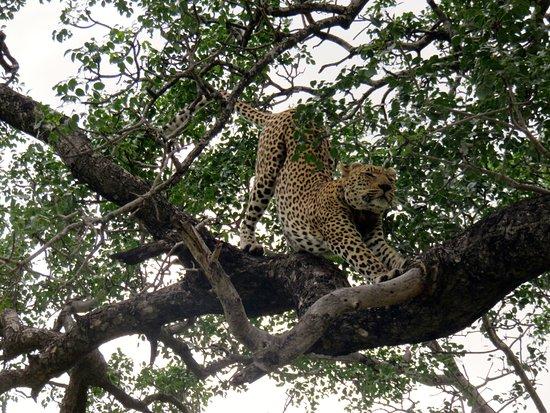 Tintswalo Safari Lodge: Dopo pranzo