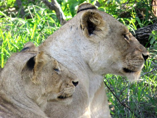 Manyeleti Game Reserve, South Africa: Madre e figlio