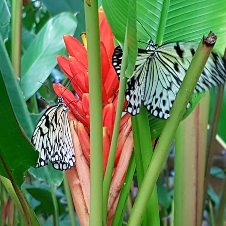 Victoria Butterfly Gardens - Picture of Victoria Butterfly Gardens ...