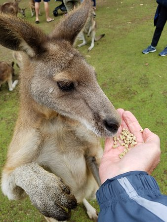 Taranna, Australia: Very gentle, but they were hungry.