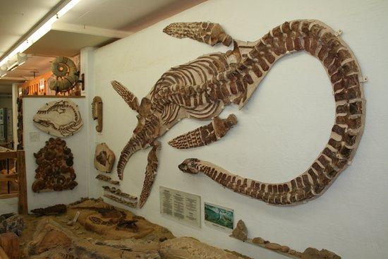 Urweltmuseum Neiderhell