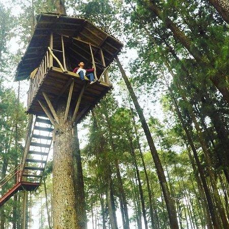 Grafika Cikole Hotel & Camping: Rumah Pohon