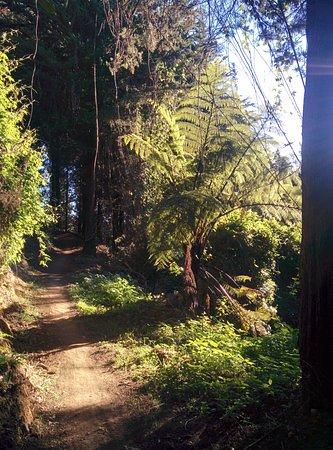 Richmond, Νέα Ζηλανδία: Beautiful forest singletrack