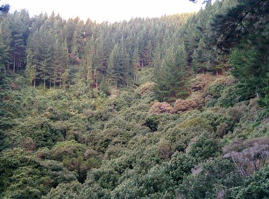 Richmond, New Zealand: Exodus flows through native bush