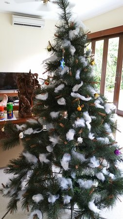 Villa Bugis: They brought us a Christmas tree!