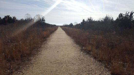 South Cape May Meadows: 20170111_124008_large.jpg