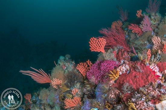 Gordon's Bay, Sudáfrica: Beautiful, pristine reefs