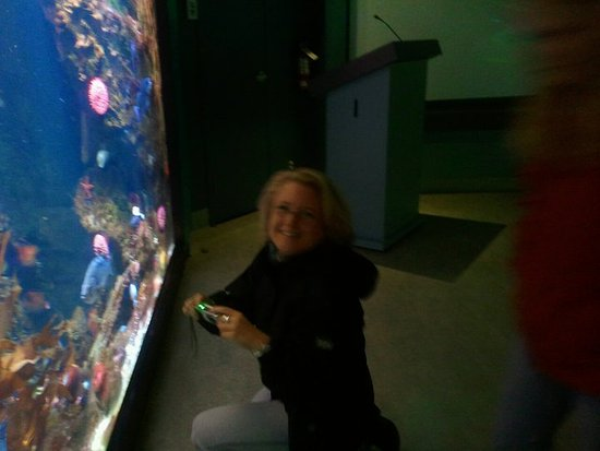 Sidney, Canadá: Me trying to take pictures of the wonders of the deep oceans.