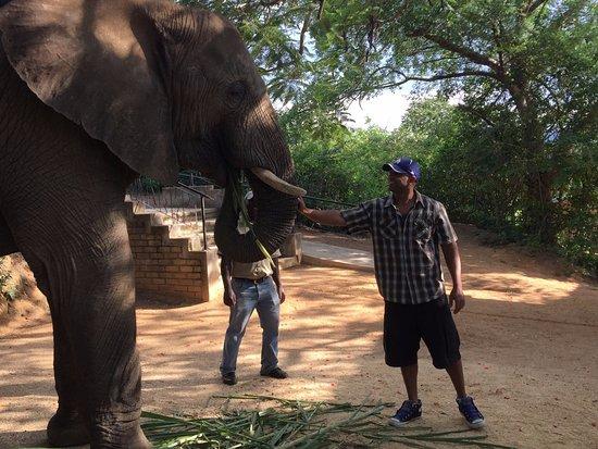 Hazyview, Güney Afrika: More interaction