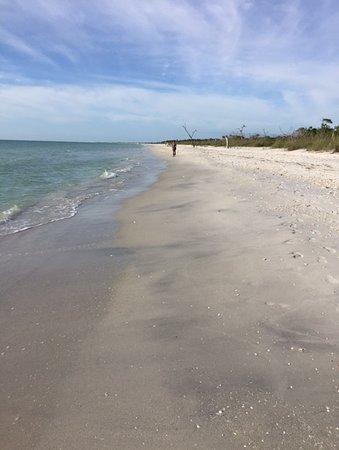 Bokeelia, FL: Beach at Cayo Costa STATE PARK ISLAND
