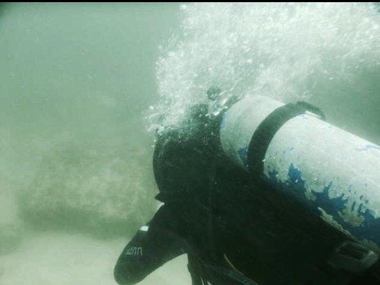 Vallarta Undersea: photo0.jpg