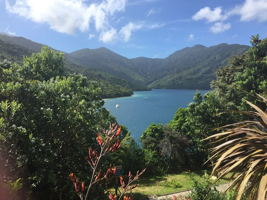 Picton, Nuova Zelanda: The view from our accomodation at Punga Cove