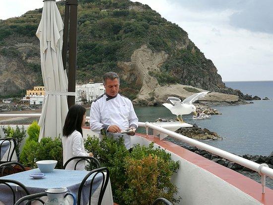 Serrara Fontana, Italy: el chef dando de comer a una gaviota amiga que le visita desde hace años