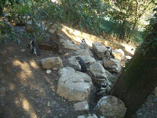 Pinguini Picture Of Giardino Zoologico Di Pistoia