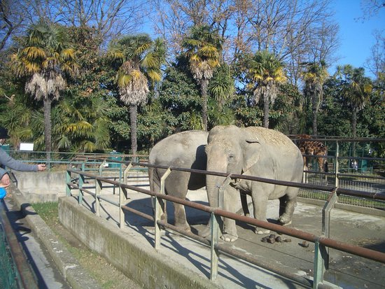 Elefanti Picture Of Giardino Zoologico Di Pistoia
