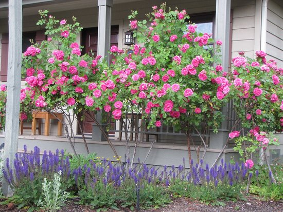 Bridge Street Cottages: Beautiful Flowers adorn the property