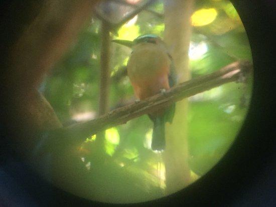 Werner Sauter Biological Reserve: photo2.jpg