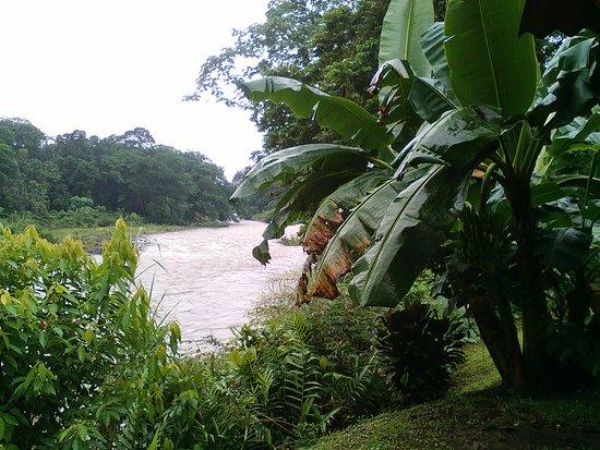 Puerto Viejo de Sarapiqui, Costa Rica: IMG_20170111_091907_large.jpg
