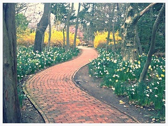 Hamilton, Nueva Jersey: Trail thru forsythia and daffodils at Sayen Gardens