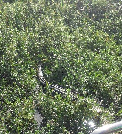 Kenansville, FL: photo1.jpg