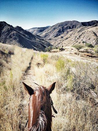 Bilde fra Sonora