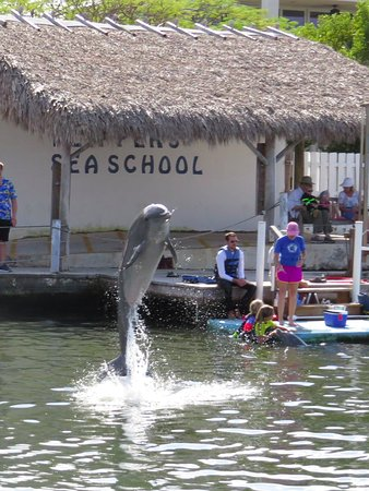 """Dolphin Research Center: the """"show"""""""