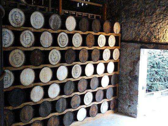 Le Francois, มาร์ตินีก: distillerie et jardin