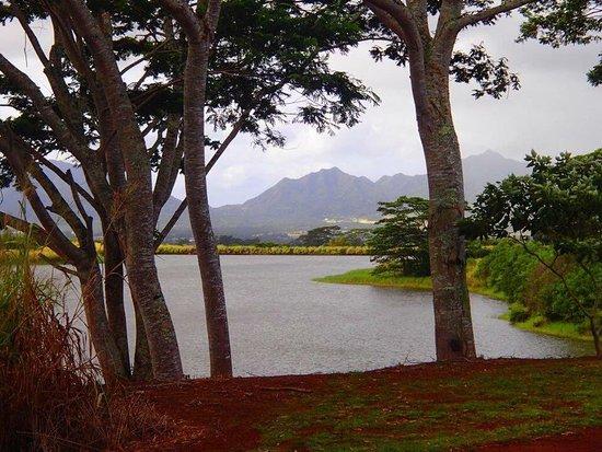 Wahiawa, Hawái: photo6.jpg
