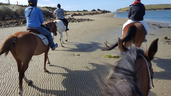 Owaka, Nueva Zelanda: More on the beach