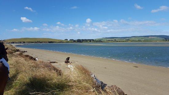 Owaka, Nueva Zelanda: Exciting sea lion