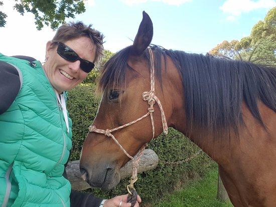 Owaka, Nueva Zelanda: Best horse