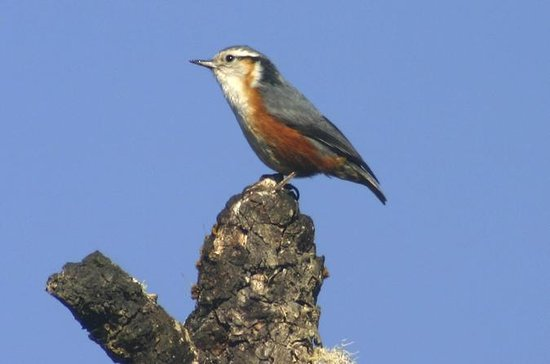 Half-Day Bird Watching Tour in Yangon