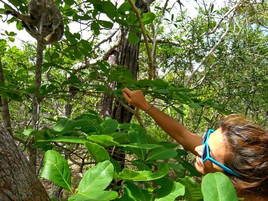 Остров Магнетик, Австралия: IMG-20170110-WA0002_large.jpg