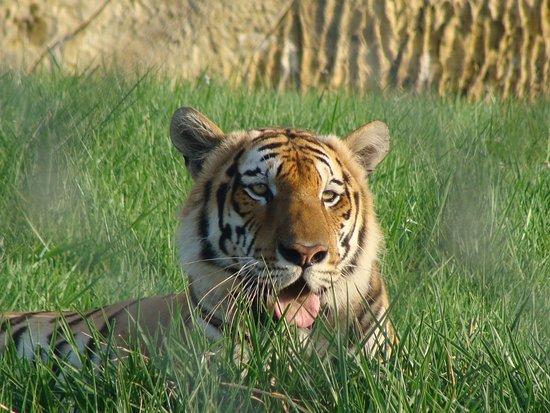 Parque Temático Hacienda Nápoles: Los animales que hay, y se conservan mucho!
