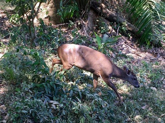 Nicoya, Kosta Rika: Curu National Wildlife Refuge