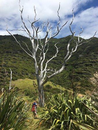 Rangiora, นิวซีแลนด์: photo4.jpg