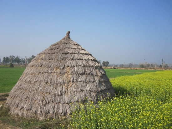 Virsa Travels: Village farms visit
